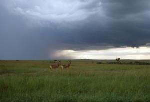 Kenya Rain